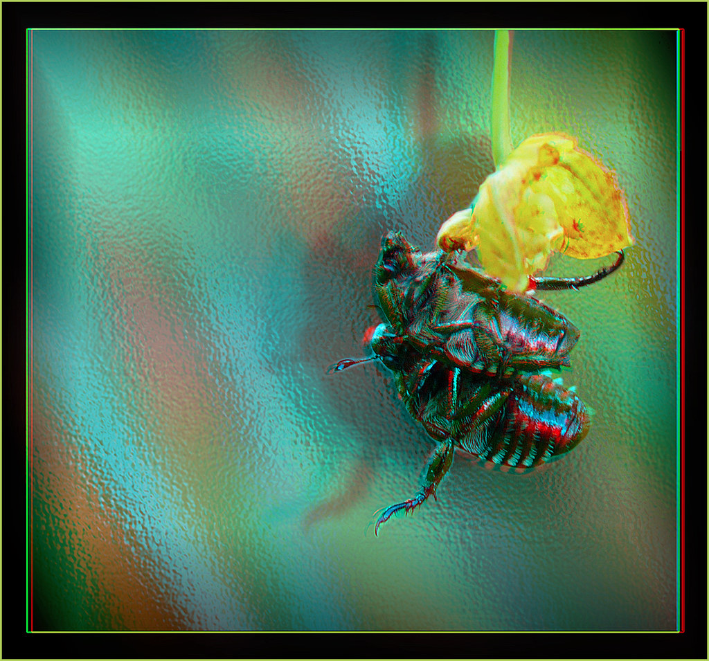 Hang in There Baby - Anaglyph 3D