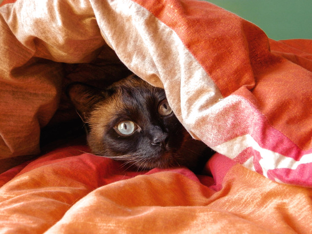 It's cold outside, why don't you stay in bed?