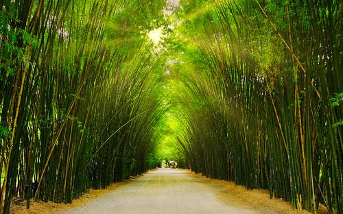 thailand saraburi grove tunnel bamboo temple sunbeam landscape lush idyllic foliage sun