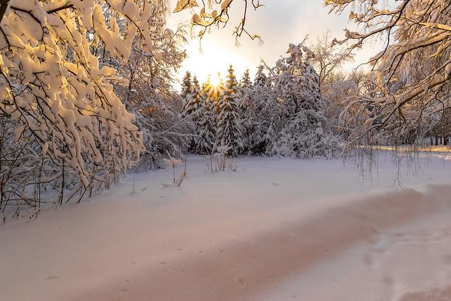 The sorceress winter