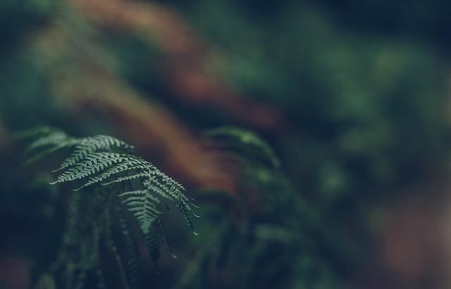 Between ferns