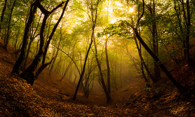 Discover Nature in Autumn