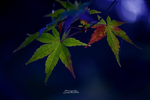 Azul y rojo...