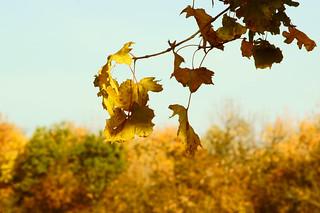 Осень на фоне неба / Autumn in the sky   by Владимир-61