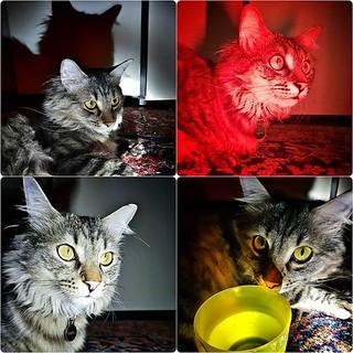 Cat and light #cat #pet #animal #family #home #play #fun #eyes #love #light #red #yellow #dark #relax #grigiomahlertontolomeo #night #funny #4linkedin #funny #cute #animallovers #pets #petsofinstagram #petstagram #ilovemycat #bellobelloinmodoassurdo   by Mario De Carli
