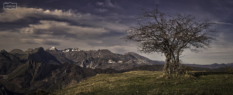 La espinera/ The thorn tree