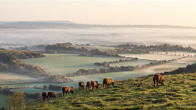 Grazing on a Misty Morning