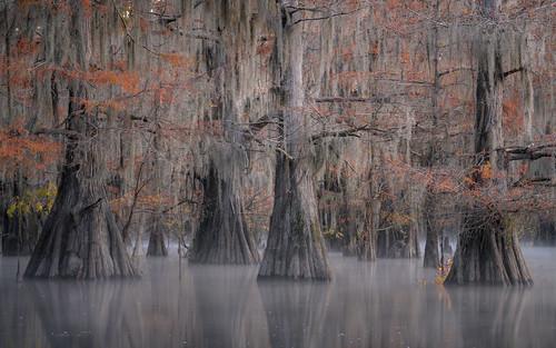 Autumn in the Swamp