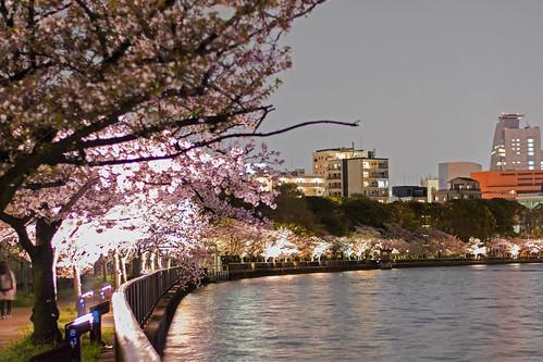 O River Sakura - Osaka, Japan   by inefekt69