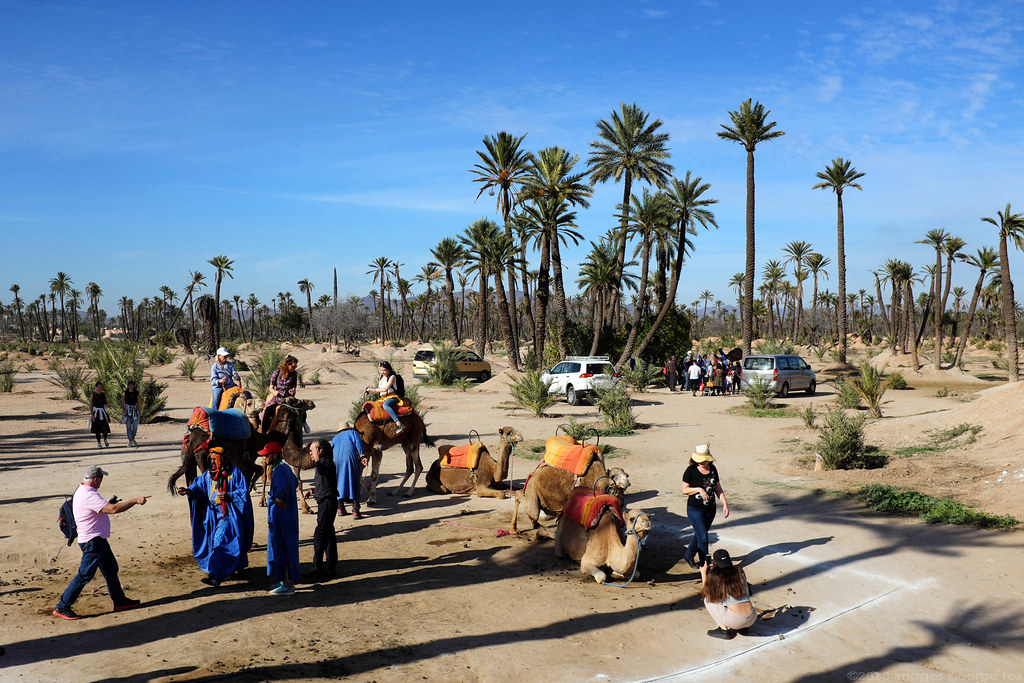 Palmeraie / Marrakech | Palm oasis to the north-east of Marr