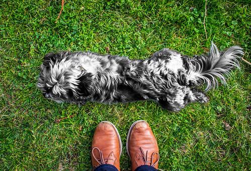 Noir Dog at my feet