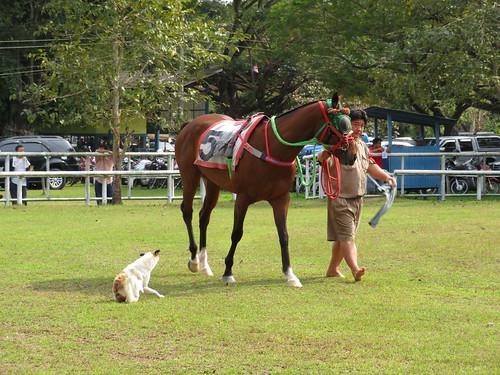 チェンマイ競馬場のパドックに入ってきてしまった犬