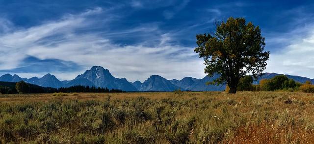 LONE TREE STANDING
