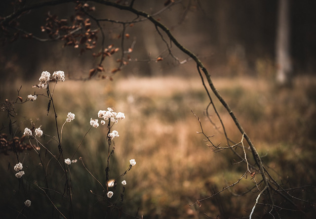 forest glade in November