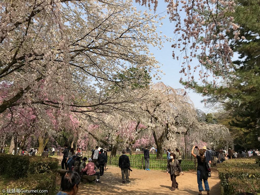 打工度假-京都生活-賞花、野餐-097