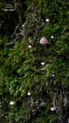 木の小さい世界 - Il piccolo mondo dell'albero