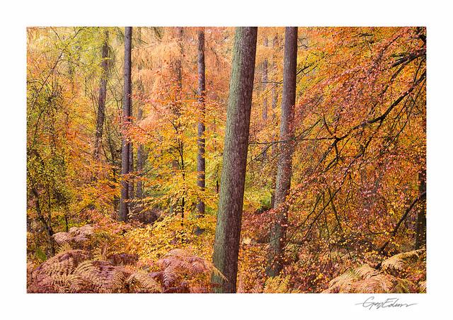 Autumn Chaos
