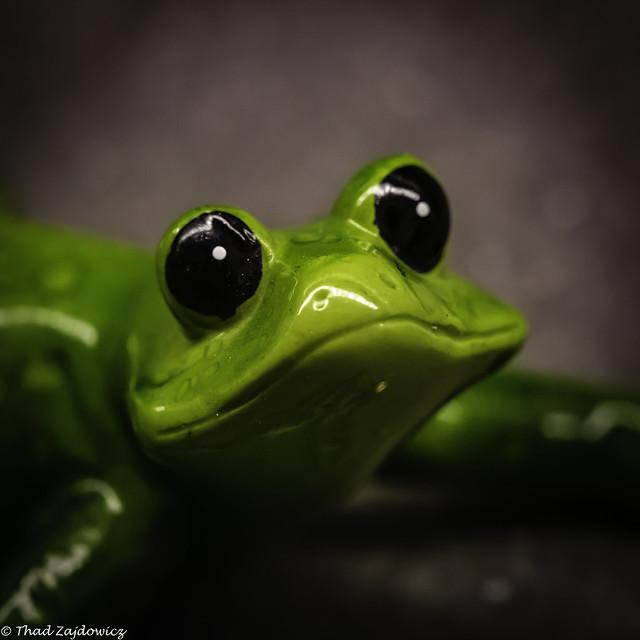 Cute Froggie -- HMM!