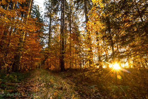 Sunset in the Autumnal Forrest | by Andre Hauschild