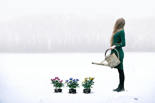 Frozen Garden | by Anna Sterling Art