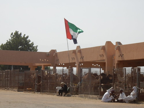 Al Ain - Camel Market - 1
