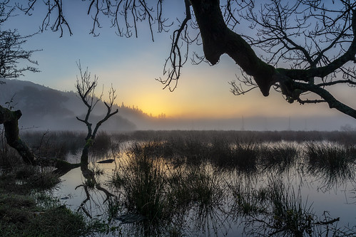 ambleside england unitedkingdom gb sunrise landscape fog mist lake district long exposure formatt hitech tree reflection reflections