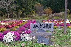 名入ざる菊園