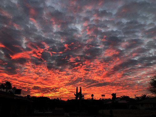 arizona sunset monsoon cloudy clouds saguaro cactus silhouette color colors nature natural orange yellow red purple outdoor sky dusk cloud city tree grass