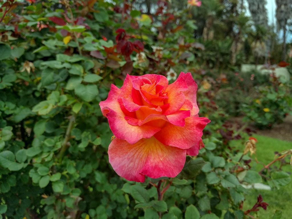 Rose Garden Place sales tax calculator