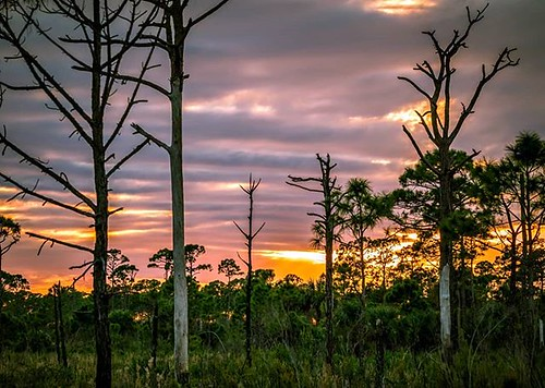 instagram ifttt sunset clouds softclouds florida esterobaypreservestatepark floridastateparks colorful naturephotography nature