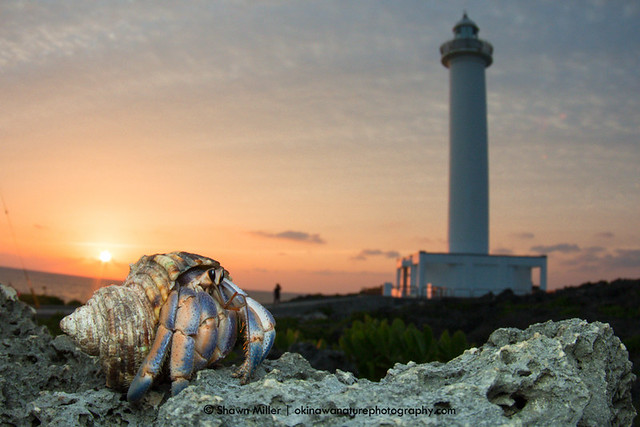 Hermit crabs and lighthouses