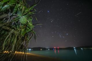 Amami Starry Sky of  Pandanus   by masahiro miyasaka