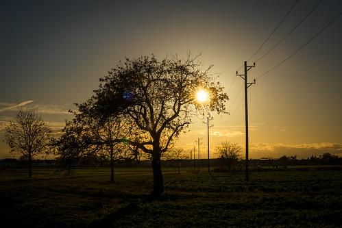 sonne licht baum bäume feld felder acker landschaft iffezheim feldweg weg wege pfad himmel warmeslicht gelb bunt blätter wiese gras gräser natur birnenbaum leitung überland holz stamm wolken sonnenuntergang abend