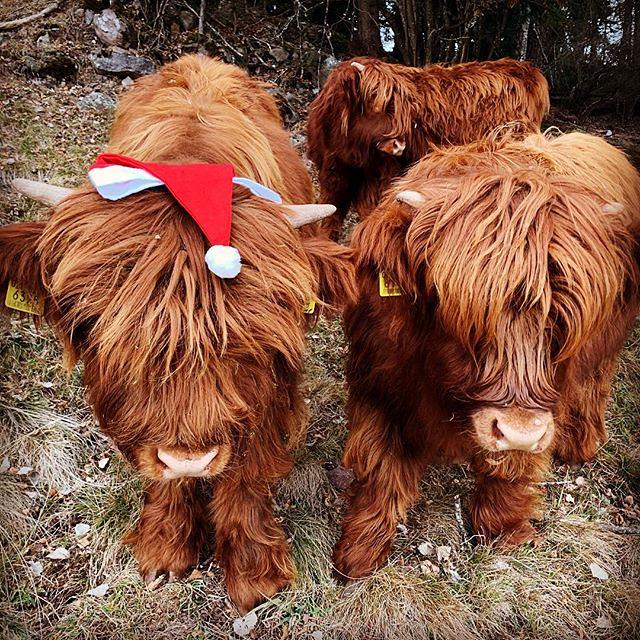 Wir Wünschen Euch Allen Frohe Weihnachten