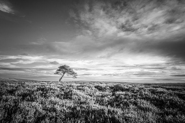 Alone on the moors