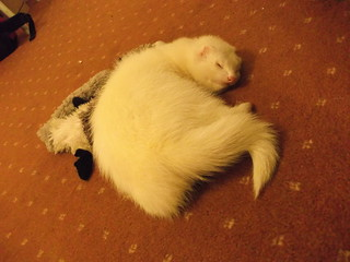 Sleepy Sherbet