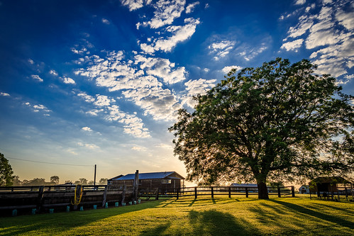 clouds farm grass landscape nsw newsouthwales sunrise fence trees