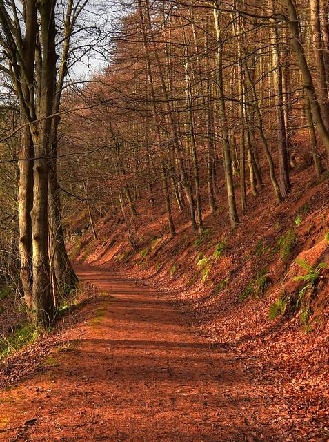 Woodland Colour Walk
