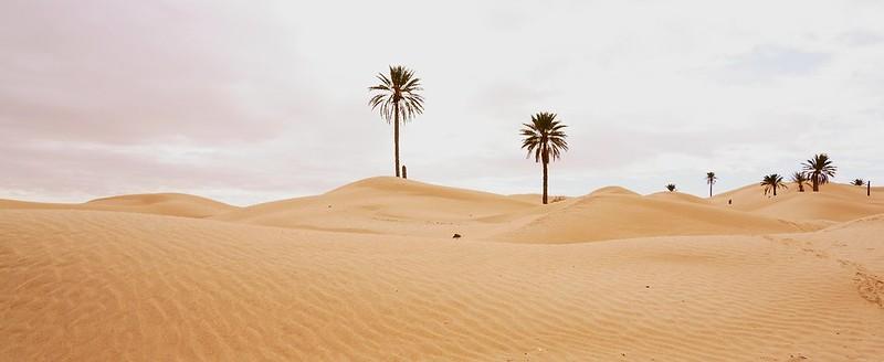 Dünen von Zaafrane 1