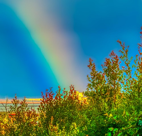 rainbow bay sanfranciscobay plants omd olympus