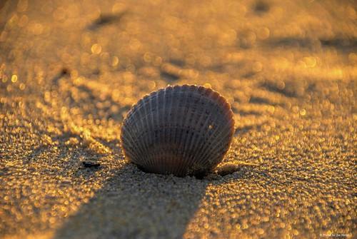 sunblock lowerslowerdelaware lsd lewesde lewes delaware de scallopshell shell sand beach bokeh capehenlopenstatepark capehenlopen statepark park sunset watchingthesunset shadow sussexcounty