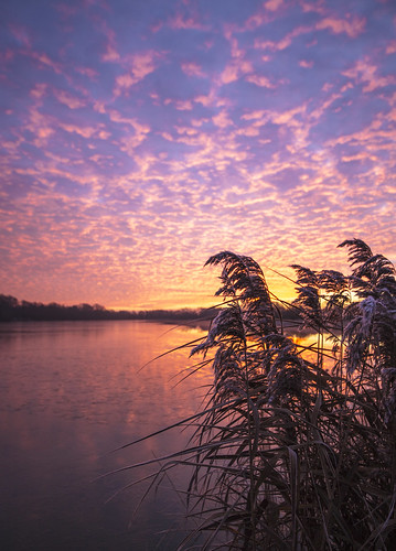 canon6d sunrise dawn morning landscape waterscape lake water reflection sky clouds colour reeds outdoors nature uk cambridgeshire