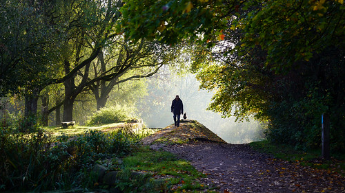 daisynook countrypark locks path oldham manchester walkingthedog uk sunrise autumn hollinwoodcanal leaves crepuscularrays rays crepuscular failsworth trees branches sammysbasin steve poppy