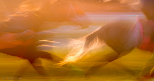 horses training sunrise abstract artistic aesthetic cinematic horsetail soft pastel animal speed fast trainingride