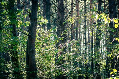 dacha ukraine travel nature counterlight tree leaves art forest light