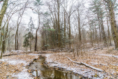 snow nature scenic landscape stream snowfall park trees