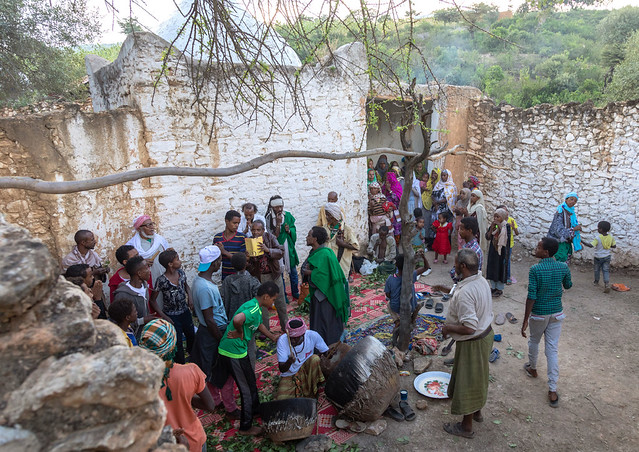 Harari men chewing khat during a sufi celebration, Harari Region, Harar, Ethiopia