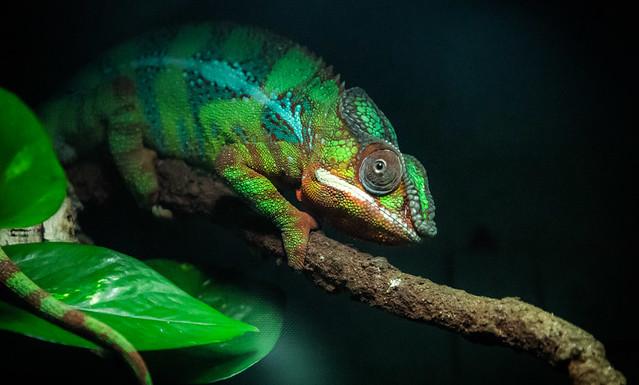 337/365: Karma Chameleon...Boy George