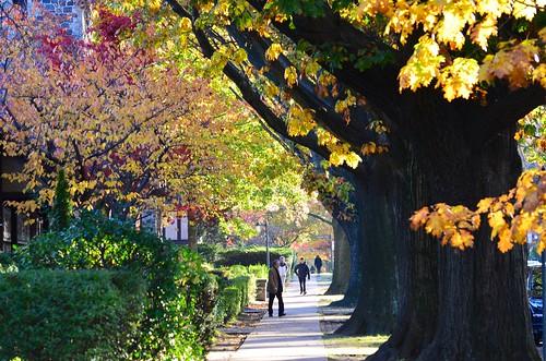 Autumn On Ascan Avenue