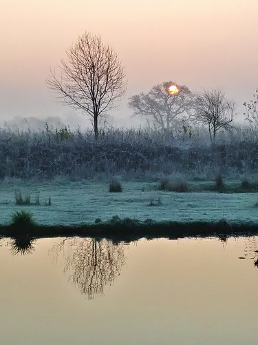 trees shadows mist frost reflection